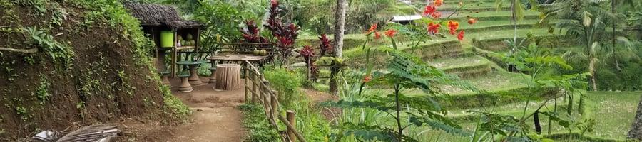 Thai path